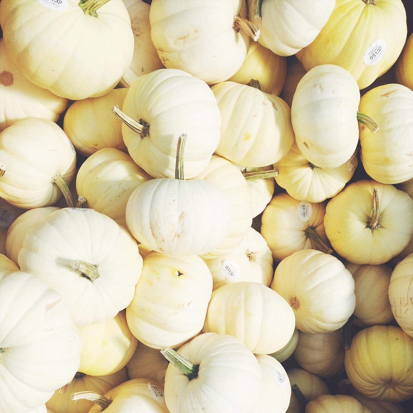 white-fall-pumpkins